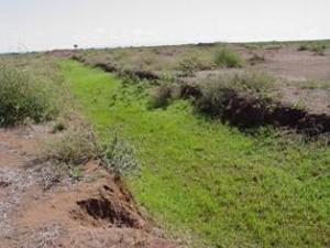 Contour trenches met nieuwe vegetatie